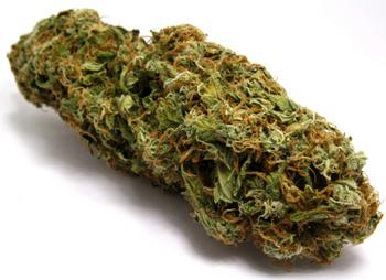 Israel Embraces Medical Cannabis