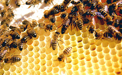 Bee's Get GMO Treatment: Monsanto Buys Leading Bee Research Firm For Pollination Control