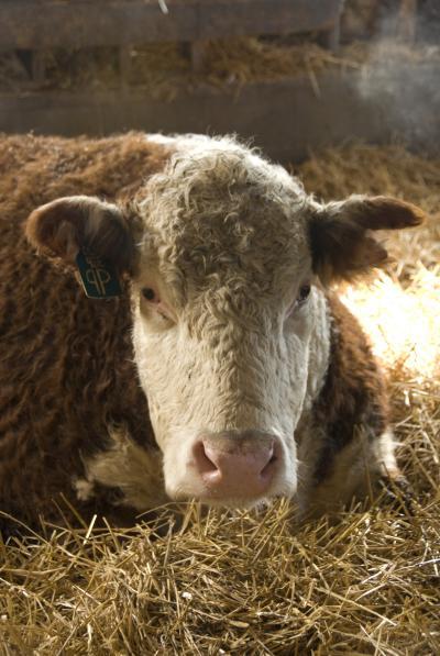 Michigan Announces Plan to Destroy Ranch Livestock & Arrest Farmers