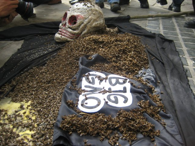 Occupy Monsanto Poland Dumps Thousands of Dead Bees in Protest