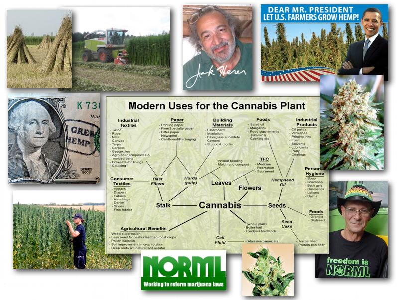 August 31, 2012 – DCMX Radio: Cannabis, Hemp, Marijuana: The Eco-Super-Plant and its Threat to the Profit Driven Synthetics Industry