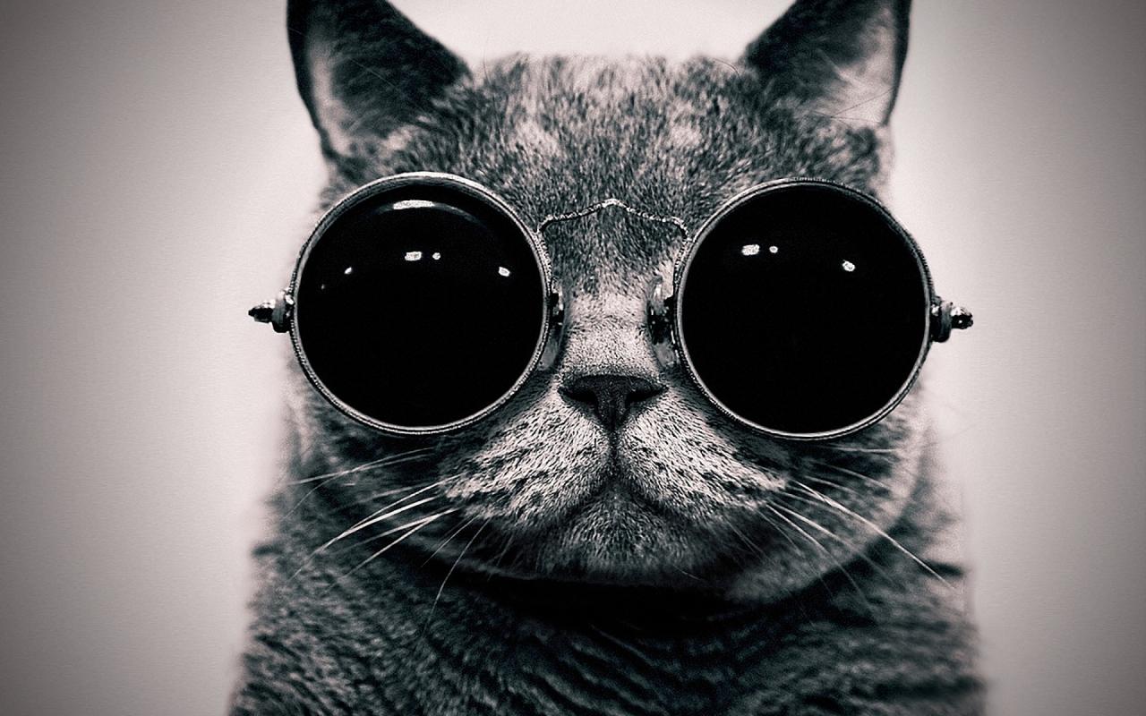 Quantum Measurements Leave Schrödinger's Cat Alive