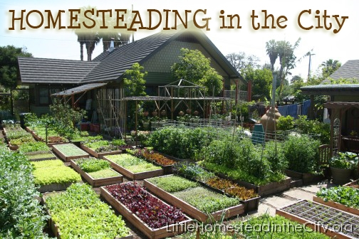 Amazing Homesteading Ideas to Help You Become More Self-Sufficient