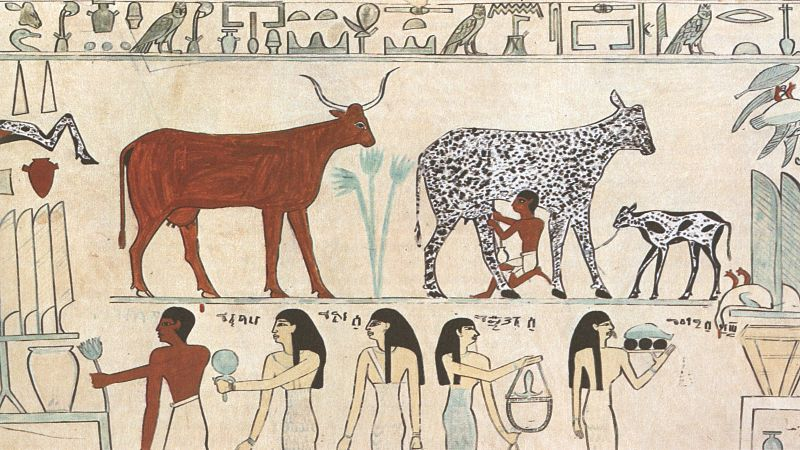 The Origins of Agriculture – a Biological Perspective and a New Hypothesis
